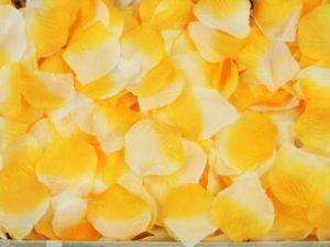 Лепестки оранжево-белых  роз
