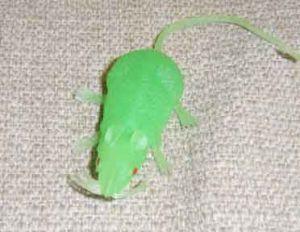 Крыса светящаяся