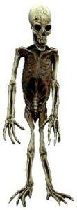 Скелет обезьяны